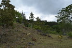 Montana Verde Land in Boquete