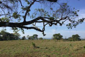 Gualaca Land